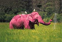 220px-Pink_Elephant.jpg